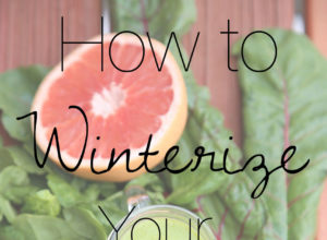Winterize Your Smoothies | The Organic Beauty Blog